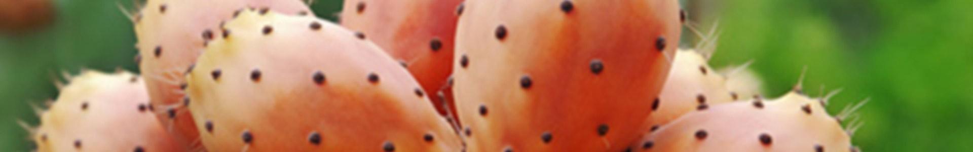 Kaktusfeigenkernöl - Gesichtsprodukte für reife Haut